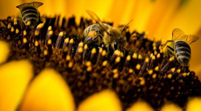 Legea apiculturii nr. 383/2013
