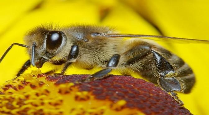 Programul naţional apicol pentru perioada 2014-2016, din 11.12.2013